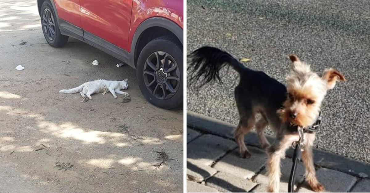 """מימין: הכלב שנטרף והחתולה ש""""נשחטה"""""""