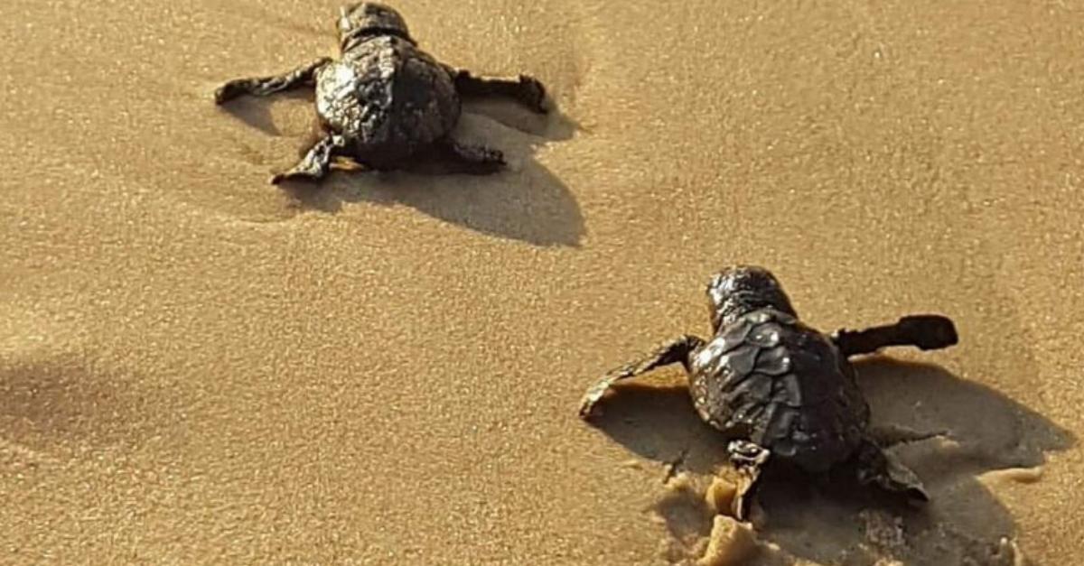 מינים בסכנת הכחדה