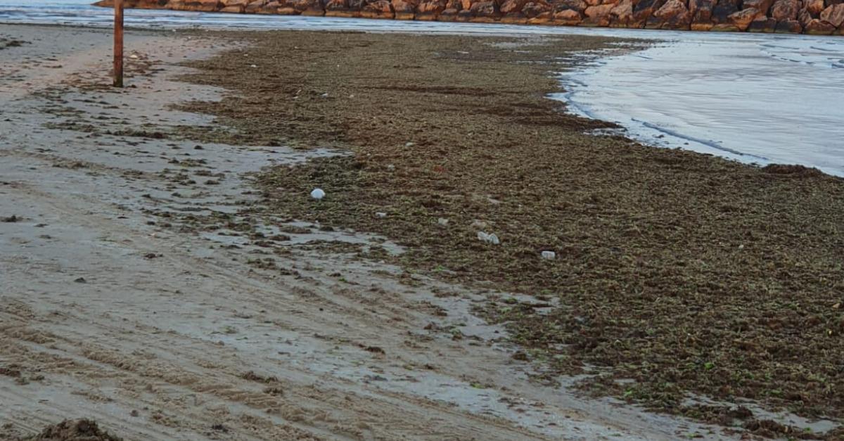 האצות בחופי הרצליה