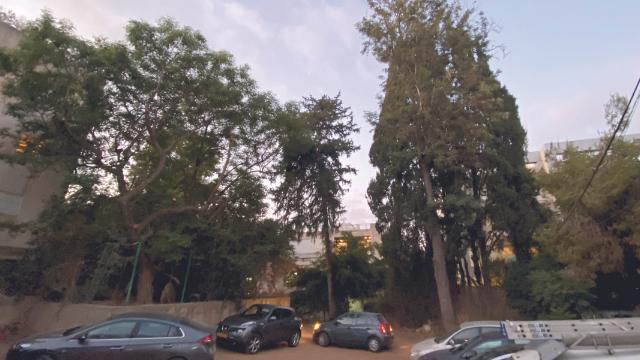 העצים שניצלו. הישג מרשים